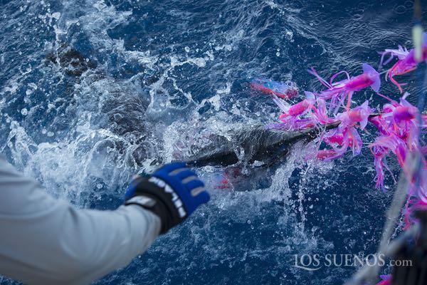 lossuenos_costarica_fishing_2017_29
